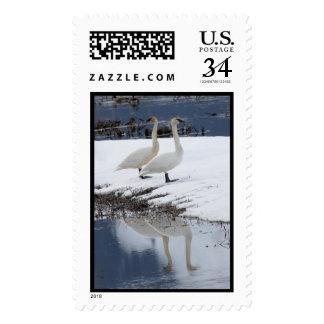 Alert Swans Postage