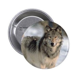 Alert Wolf Pinback Button