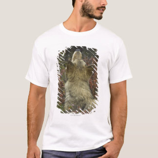 Alert young Grey wolf (Canis lupus) sniffing T-Shirt