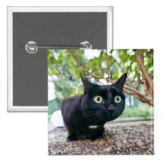 alerted cat hiding under bush. button