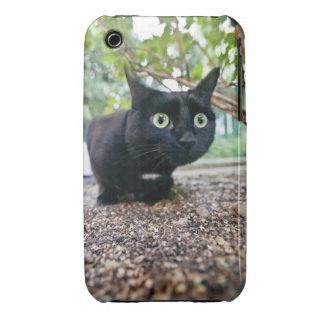 alerted cat hiding under bush. Case-Mate iPhone 3 case