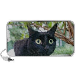 alerted cat hiding under bush. travel speaker