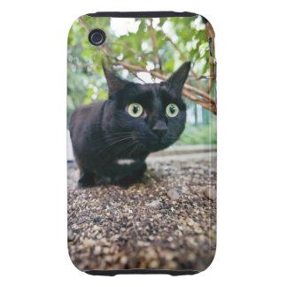 alerted cat hiding under bush. tough iPhone 3 case