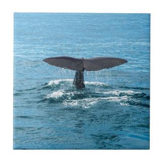 Aleta de la ballena azulejo cuadrado pequeño