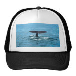 Aleta de la ballena gorras