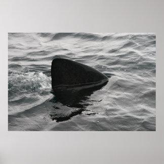 Aleta del tiburón impresiones