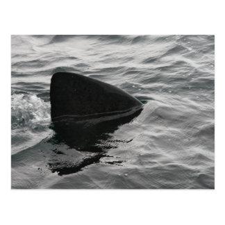 Aleta del tiburón tarjetas postales