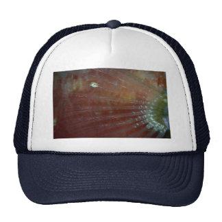 Aleta pectoral del pez papagayo del redband gorras de camionero