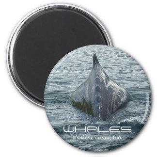Aleta trasera y dorsal de la ballena imán redondo 5 cm