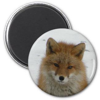 Aleutian Fox 2 Inch Round Magnet
