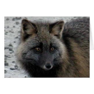 Aleutian Fox on Unalaska Island Card