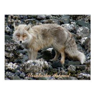 Aleutian Fox, Unalaska Island Postcard