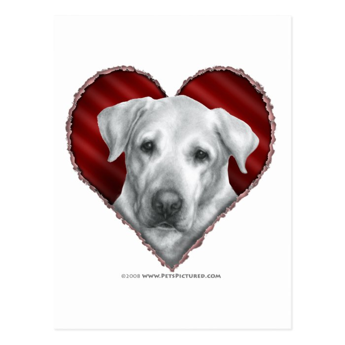 Alex, Yellow Lab with Heart Postcard
