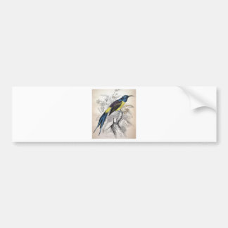 Alexander Wilson Bird Illustration Car Bumper Sticker