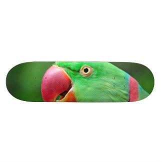 Alexandrine Parakeet Skate Deck