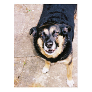 Alf the Chatty Dog Postcard