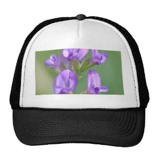 Alfalfa Trucker Hat