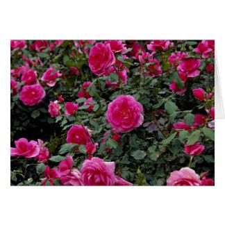 Alfie precioso 'Poulfi color de rosa miniatura Tarjeta De Felicitación