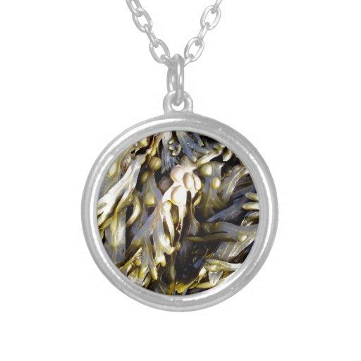 Alga marina collar personalizado