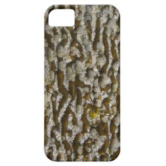 Alga marina - compañero del caso del iPhone 5 iPhone 5 Case-Mate Carcasa