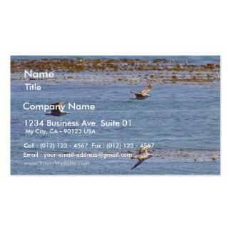 Alga marina de las gaviotas de los pájaros del océ tarjeta personal