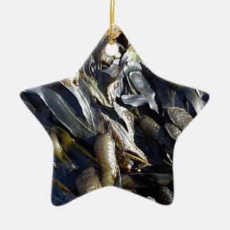 Alga marina adorno de cerámica en forma de estrella