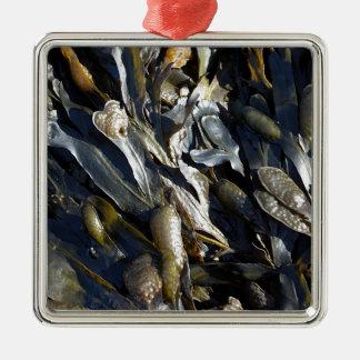 Alga marina adorno cuadrado plateado