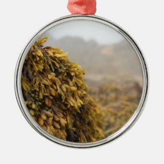 Alga marina del océano adornos