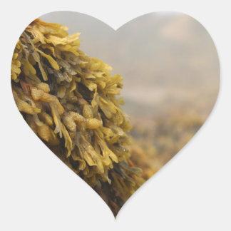 Alga marina del océano pegatina en forma de corazón