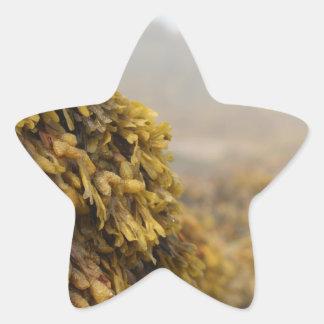 Alga marina del océano pegatina en forma de estrella