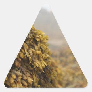 Alga marina del océano pegatina triangular