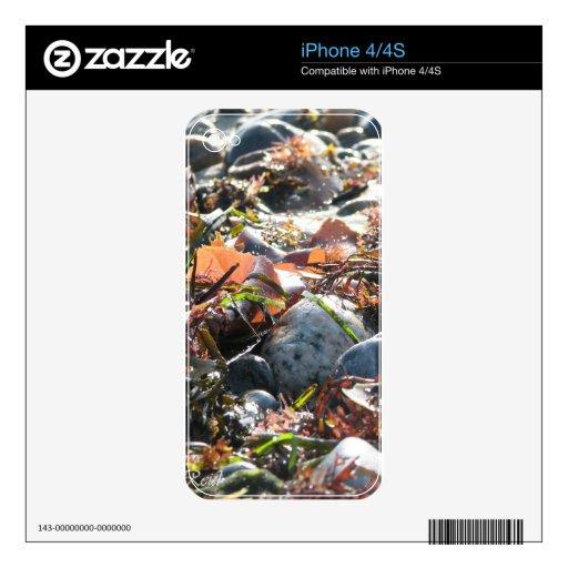 Alga marina iPhone 4S calcomanía