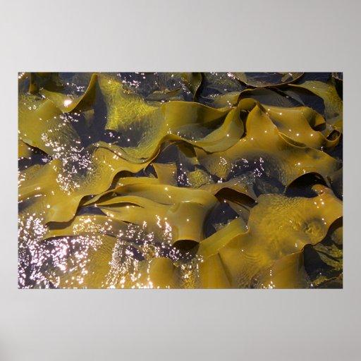 Alga marina, Nueva Zelanda Póster