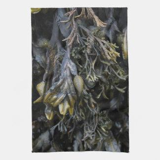 Alga marina toalla