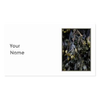Alga marina tarjetas de visita