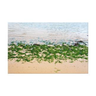 Alga marina verde clara de Youghal Impresión De Lienzo