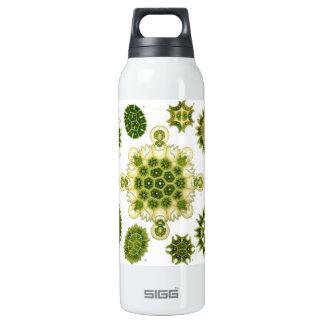 algae 16 oz insulated SIGG thermos water bottle