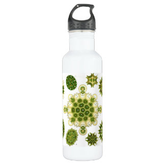 algae 24oz water bottle