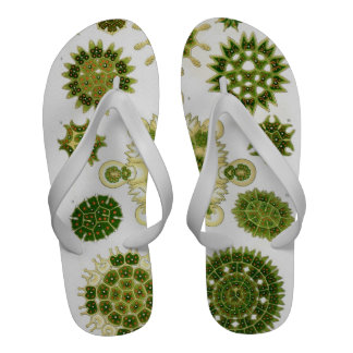 algae flip flops