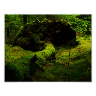 Algae Forest Poster