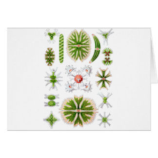 Algae Greeting Cards