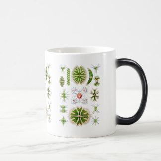 Algae Magic Mug