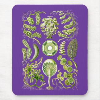 Algae Mouse Pad