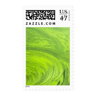 Algae on the water, Indhar Lake Stamp
