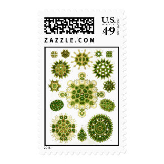 algae, postage stamps