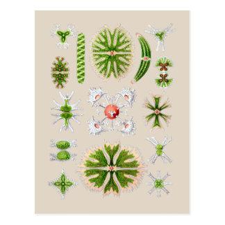 Algae Postcards