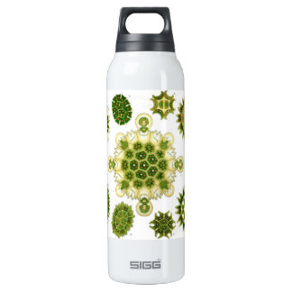 algae SIGG thermo 0.5L insulated bottle