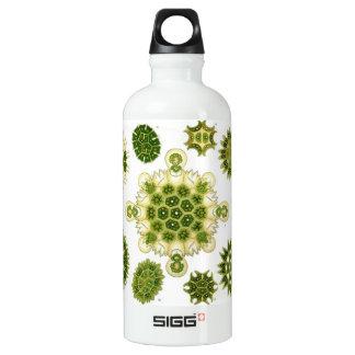 algae SIGG traveler 0.6L water bottle