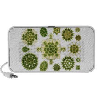 algae speaker