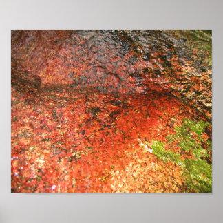 Algas de Honduras Impresiones